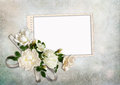 Greeting card with roses Stock Photos