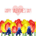 Greeting card with tulips mouse hyacinth and text happy valentine s day vector background Stock Images