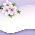 Greeting or invitation card with branch of sakura