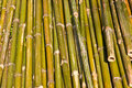 Grenn bamboo pattern texture horizon Stock Photo