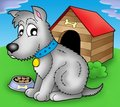 Grey dog in front of kennel Royalty Free Stock Photography