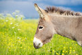 Grey donkey little in field Stock Photo