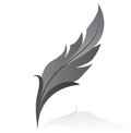 Grey feather Stock Images