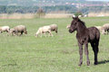 Grey foal on pasture Stock Photos