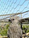 Grey go away bird a close up view of a in captivity Stock Images