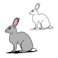 Grey hare (contours)