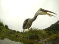 Grey heron ardea cinerea single bird by water warwickshire september Royalty Free Stock Photos