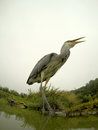 Grey heron ardea cinerea single bird by water warwickshire september Royalty Free Stock Photo