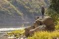 Grey heron standing on big rock near river Royalty Free Stock Photo
