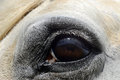 Grey horse eye close up  portrait Royalty Free Stock Photo