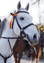 Grey horse portrait. White horse with tricolor ribbon on his head. Royalty Free Stock Photo