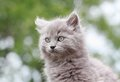Grey kitten in nature during spring Stock Images