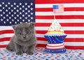 Grey kitten with patriotic cup cake Royalty Free Stock Photo