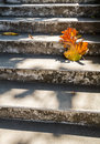 Grey old stairs with beautiful dry teak leaf on floor with amazing shadow, poetic scene and artistic background