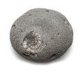 Grey pebble with embedded ammonite fossil isolated on white Stock Photography