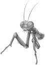 A grey praying mantis Royalty Free Stock Photo