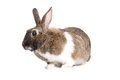 Grey rabbit, isolated on white background Stock Image
