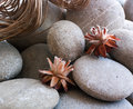 Grey stones dried flowers wallpaper Royalty Free Stock Photo