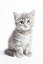 Grey striped kitten Royalty Free Stock Photo