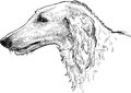 Greyhound head vector drawing of the of hunting dog Royalty Free Stock Photos