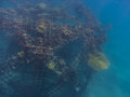 grid construction with coral in the sea