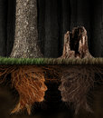Grief and grieving concept as two trees with roots shaped as human heads with one dead tree in a forest as a symbol for loss a Royalty Free Stock Images