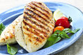 Grilled chicken breasts Royalty Free Stock Image