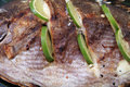 Grilled fish close up Stock Photos