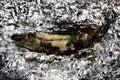 Grilled Fish On Floyd