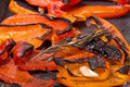 Grilled red sweet pepper Royalty Free Stock Photo