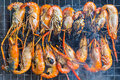 Grilled Shrimp Royalty Free Stock Photo