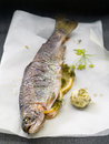 Grilled trout with lemon dill and butter selective focus Stock Image