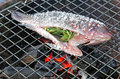 Grilling fish Stock Images