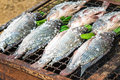 Grilling fish covered by salt on campfire Royalty Free Stock Photo