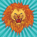 Grin lion vector illustration of a roaring Royalty Free Stock Images