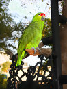 Grin parrot siting in the branch Royalty Free Stock Photos