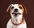 Grin puppy fun emotional dog Royalty Free Stock Photo