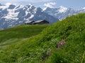 Grindelwald Royalty Free Stock Photo