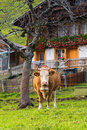 Grindelwald village jungfrau area of switzerland Stock Images