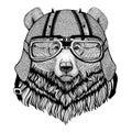 Grizzly bear Big wild bear wearing biker helmet Animal with motorcycle leather helmet Vintage helmet for bikers Aviator