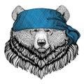 Grizzly bear Big wild bear Wild animal wearing bandana or kerchief or bandanna Image for Pirate Seaman Sailor Biker