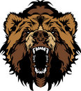 Grizzly Bear Mascot Head Graphic Royalty Free Stock Photography