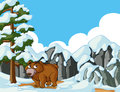 Grizzly bear in snow mountain