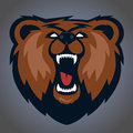 Grizzly mascot, team logo design. Royalty Free Stock Photo