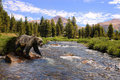 Grizzly in the mountains Royalty Free Stock Photos