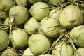 Gröna kokosnötter Royaltyfri Fotografi