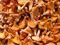Grocery store - chanterelle mushrooms Royalty Free Stock Photo
