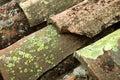 Groen korstmos Stock Foto