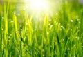Groene graszonsondergang Royalty-vrije Stock Fotografie