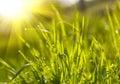 Groene graszonsondergang Stock Foto